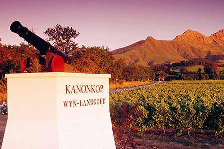 Stellenbosch Wine Route Tour